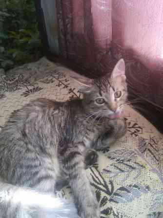 Котенок девочка 5 месяцев бесплатно Родники