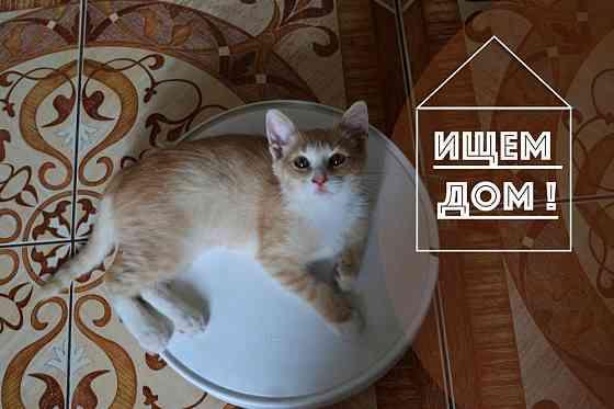 Рыжий котенок - счастье в дом Курск