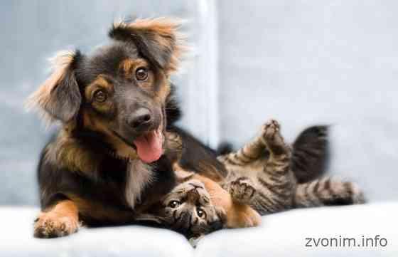 Ветеринарная вызывная служба Динго Москва