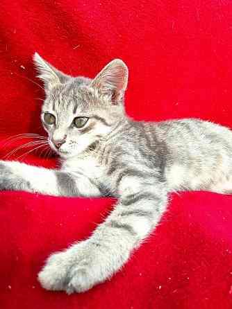 Отдам котенка в добрые руки Севастополь