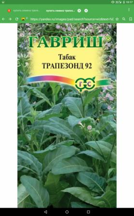 Продаются семена табака Калач-на-Дону
