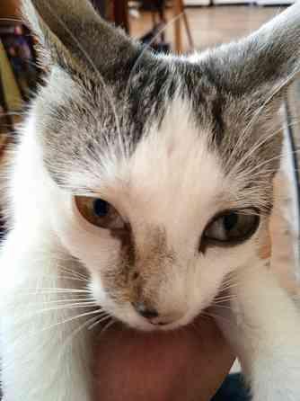 Кошка 2-3 мес. в хорошие руки Липецк