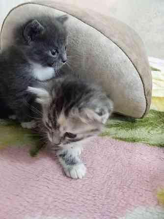 Котята в добрые заботливые руки Новосибирск